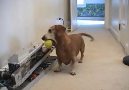 La Machine est il le meilleur ami du chien ?