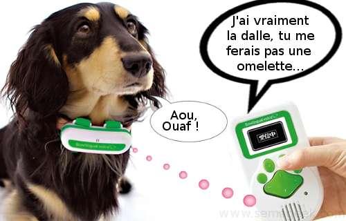 Bowlingual Voice : Donnez de la voix à votre chien...