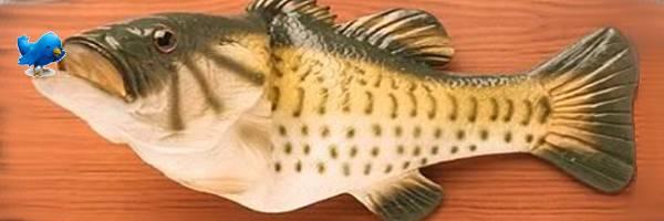 Un poisson robotisé qui lit vos messages sur Twitter.