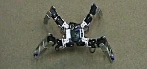 Dragoon : Une robot quadrupède qui se déplace comme une araignée