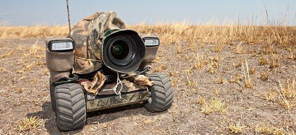 BeetleCam : Le robot photographe débarque dans la savane
