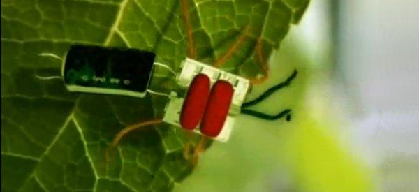 Vidéo : Découvrez les insectes électroniques