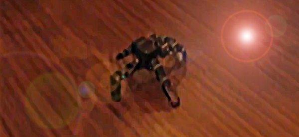 Black Tiger L45 : Le robot à 5 pattes qui déplace en sautant comme une puce.