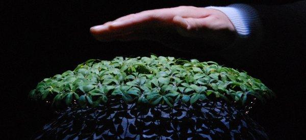 La plante robotique qui reproduit les mouvements du vent
