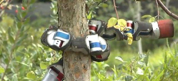 Vidéo : Un robot serpent qui grimpe un arbre
