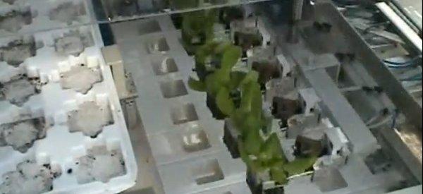 Vidéo : Une incroyable production de laitues automatisée en culture hydroponique