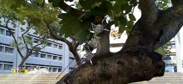 Treebot : Un robot bien agile qui grimpe aux arbres d'une manière autonome