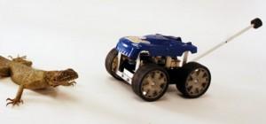 L'importance d'une queue pour stabiliser les robots à travers l'étude du lézard.