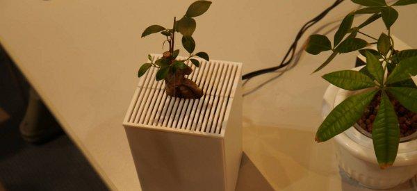 Des plantes interactives qui communiquent leurs emotions