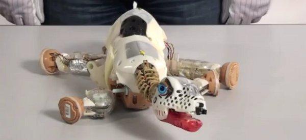 Vidéo :La dissection du robot dinosaure PLEO