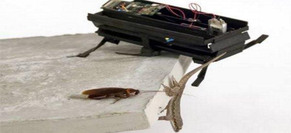 Dash : Le robot qui fait des acrobaties comme un cafard