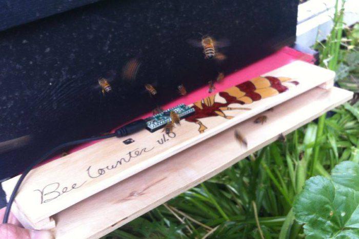 DIY : Fabriquer un compteur d'abeilles pour les ruches