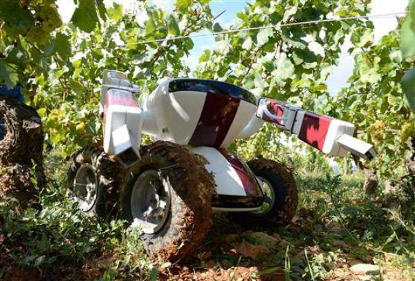 Le robot V.I.N de Wall-Ye : Un robot qui s'occupe des vignes