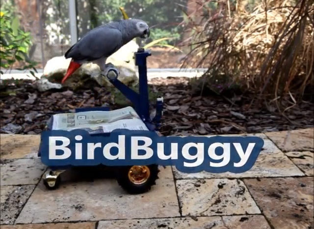 Bird Buggy : Un chariot robotisé pour perroquet