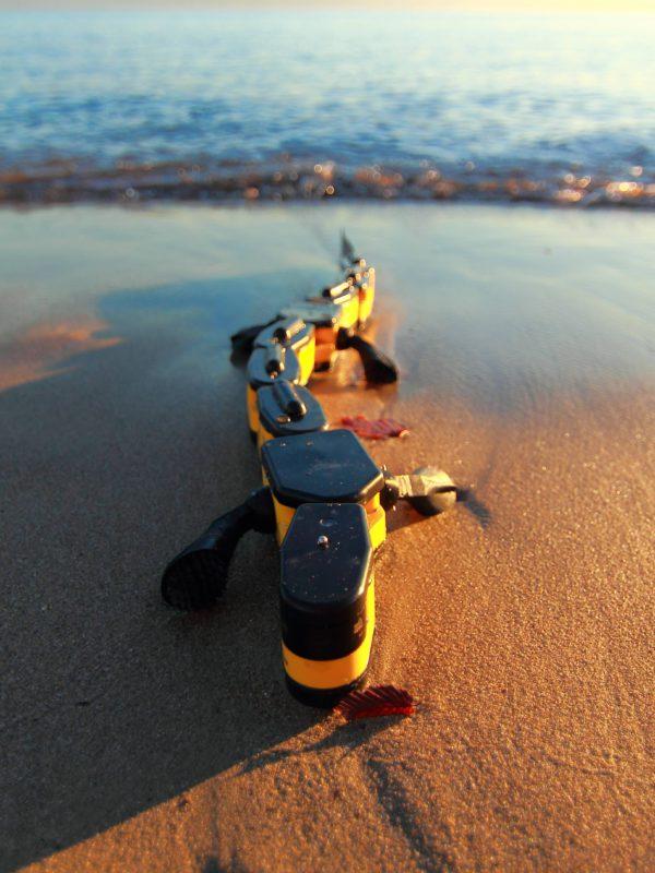 un-robot-sur-le-modele-animal-de-la-salamandre-qui-nage-et-qui-marche-02