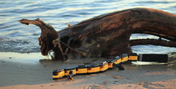 un-robot-sur-le-modele-animal-de-la-salamandre-qui-nage-et-qui-marche